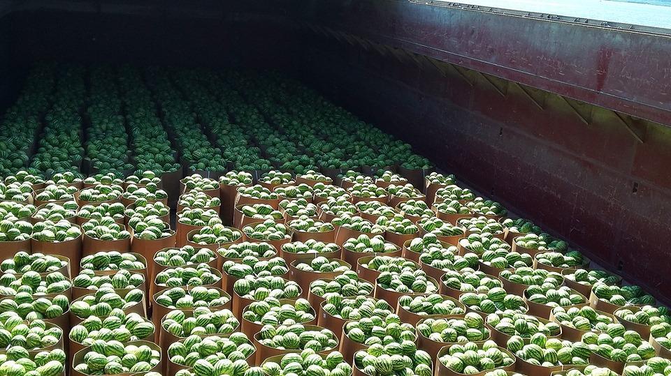 В столицу уже плывет груженная херсонскими арбузами баржа / фото Нибулон/Facebook