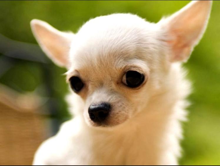 В Херсоне собака спасла хозяина / wiki.dog