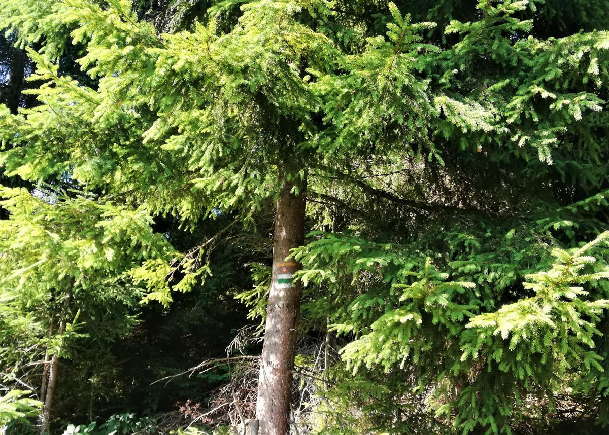 Следите за разметкой маршрута на деревьях / Фото Марина Григоренко