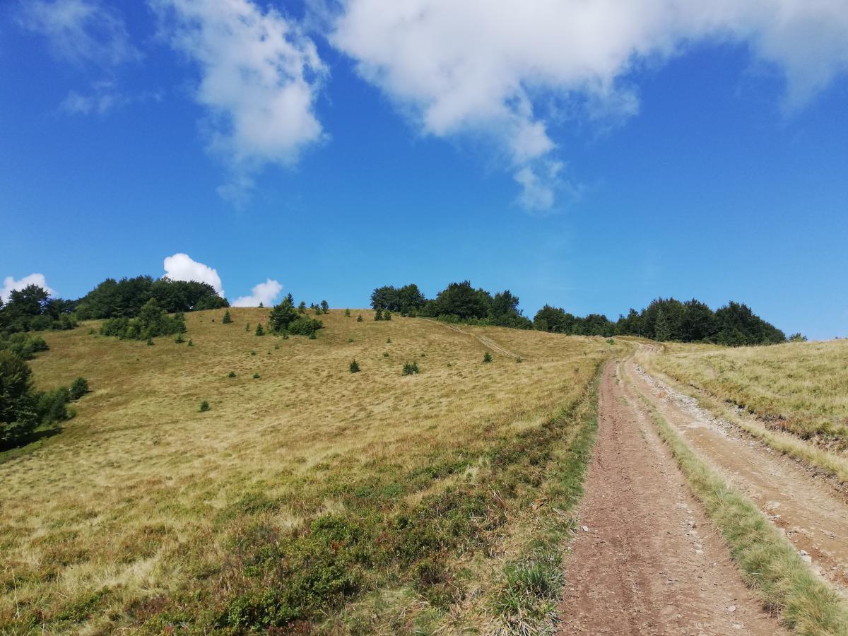 Дорога на вершину Ряпецкой совсем не сложная / Фото Марина Григоренко