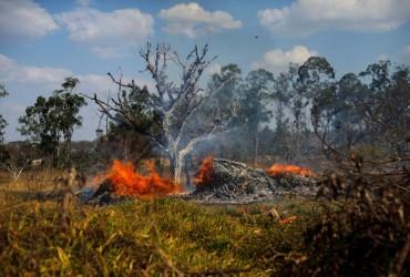 В лесах Амазонии зафиксировали рекордное количество пожаров