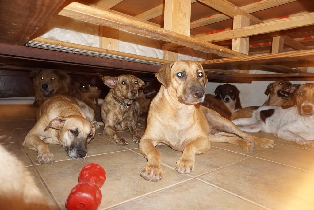 На Багамах женщина приютила 97 бездомных собак, чтобы спасти их от урагана «Дориан» / Facebook. Chella Phillips