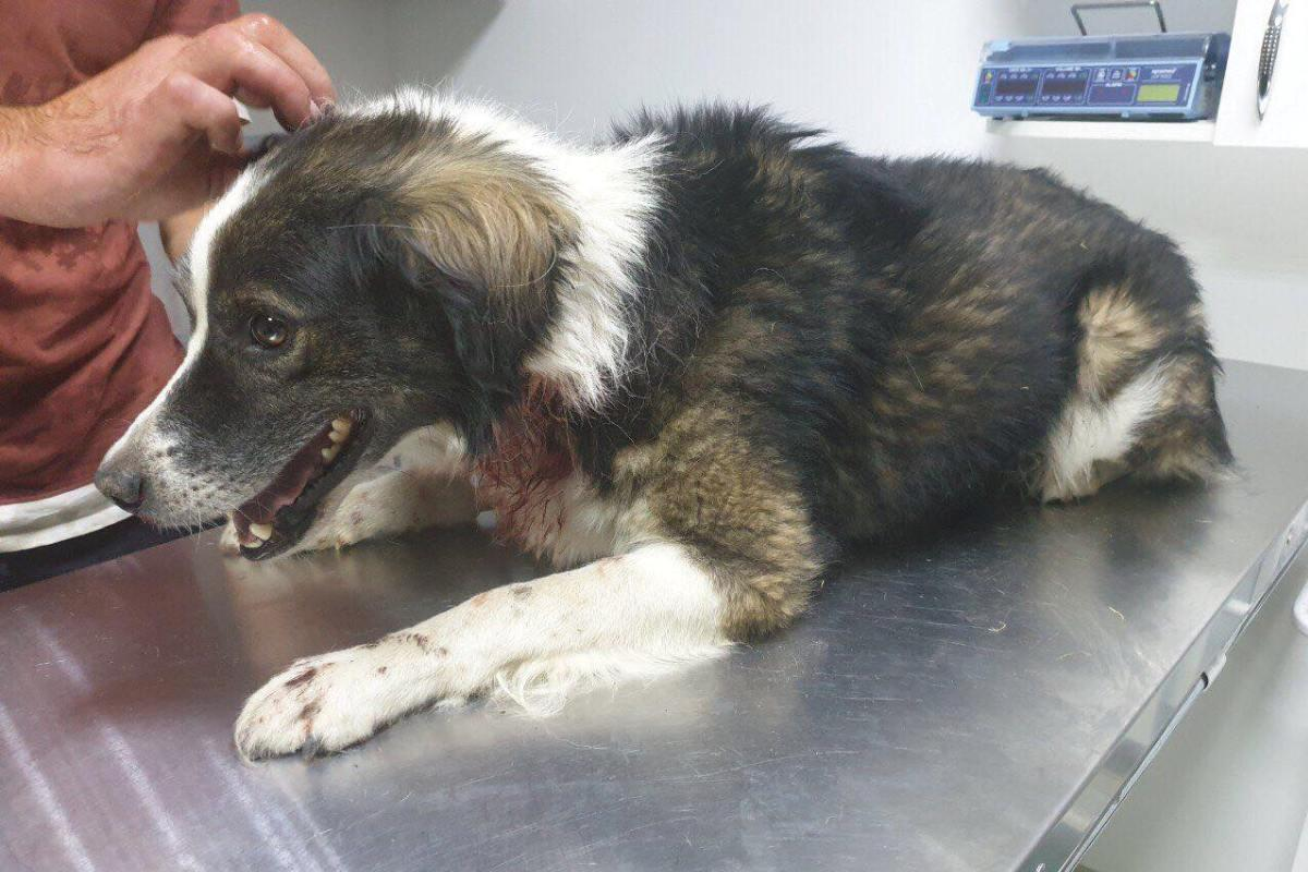 В Днепре собаку спасли от живодера / Фото Информатор