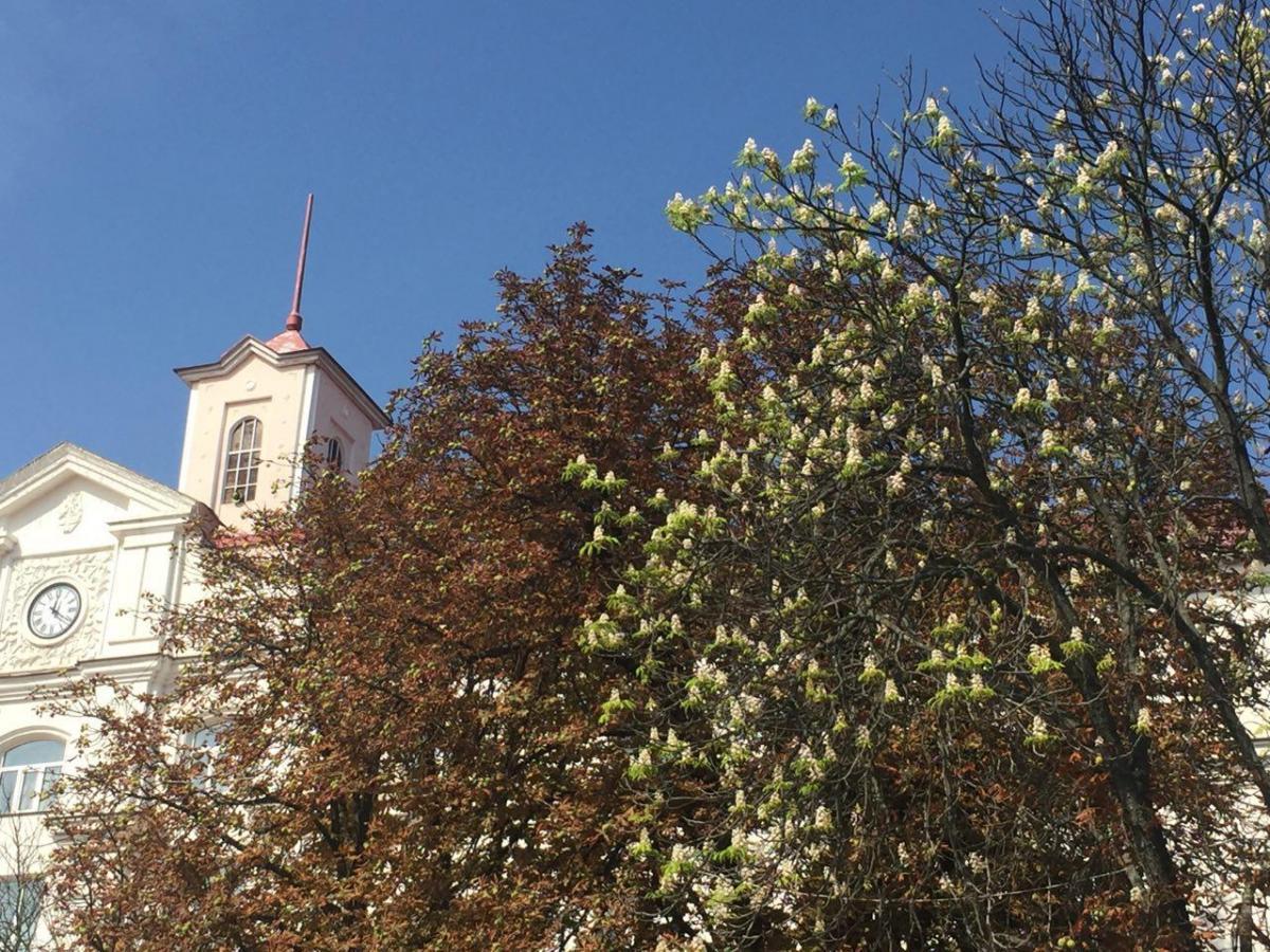 Такого массового цветения каштанов в Черниговеранее осенью никогда не наблюдалось  / фото УНИАН