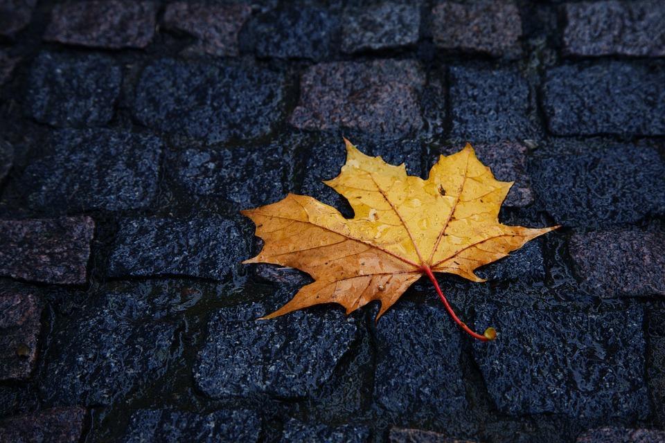 До України прийдуть дощі / фото pixabay.com