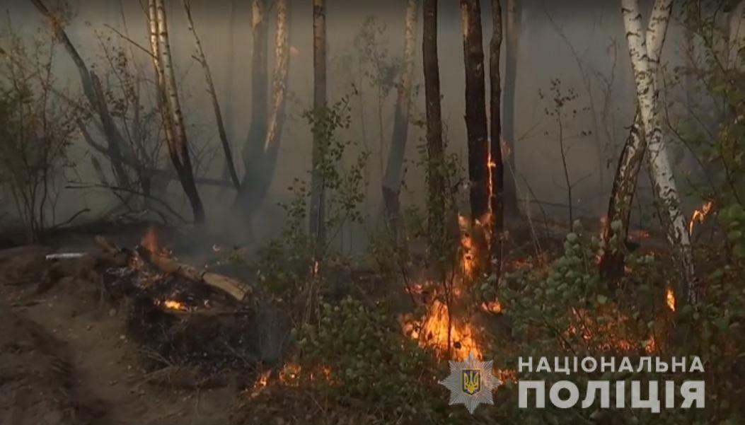 Пожежа швидко перекинулася на ліс / / фото kv.npu.gov.ua