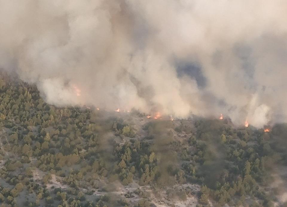 На Черниговщине горит лес / фото dsns.gov.ua
