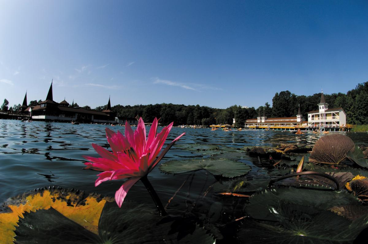 В Хевизе можно поплавать среди водяных лилий / heviz.hu