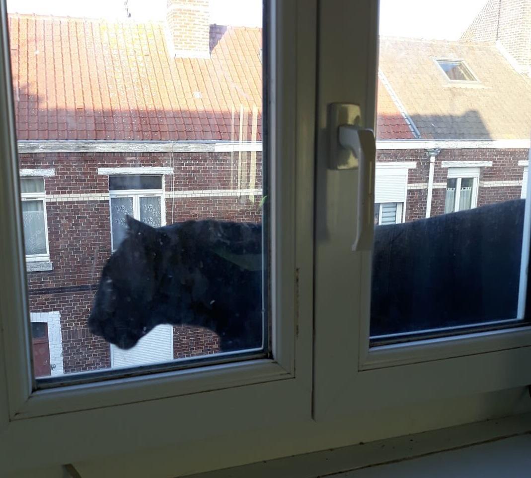 Черная кошка ходила по карнизу второго этажа жилого дома / фото twitter.com/antonbundle