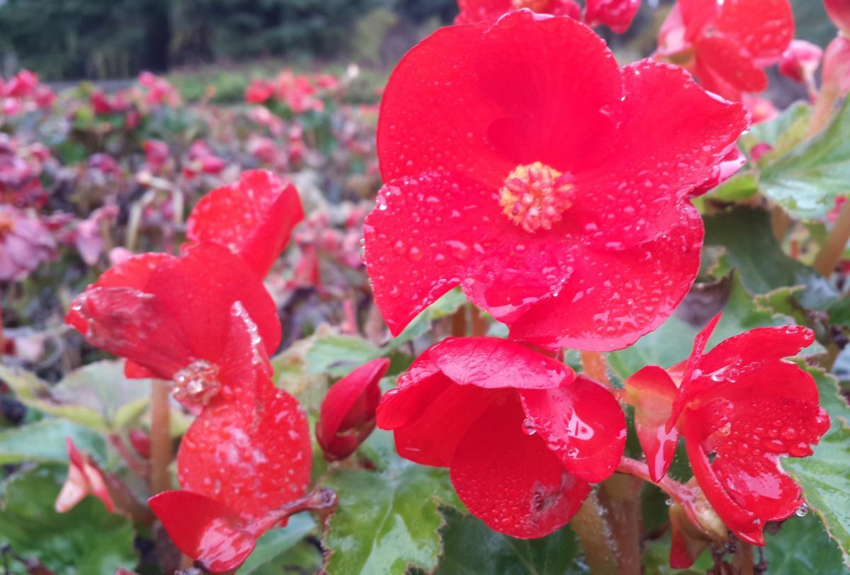 Навіть на початку листопада тут ще є квіти / Фото Марина Григоренко