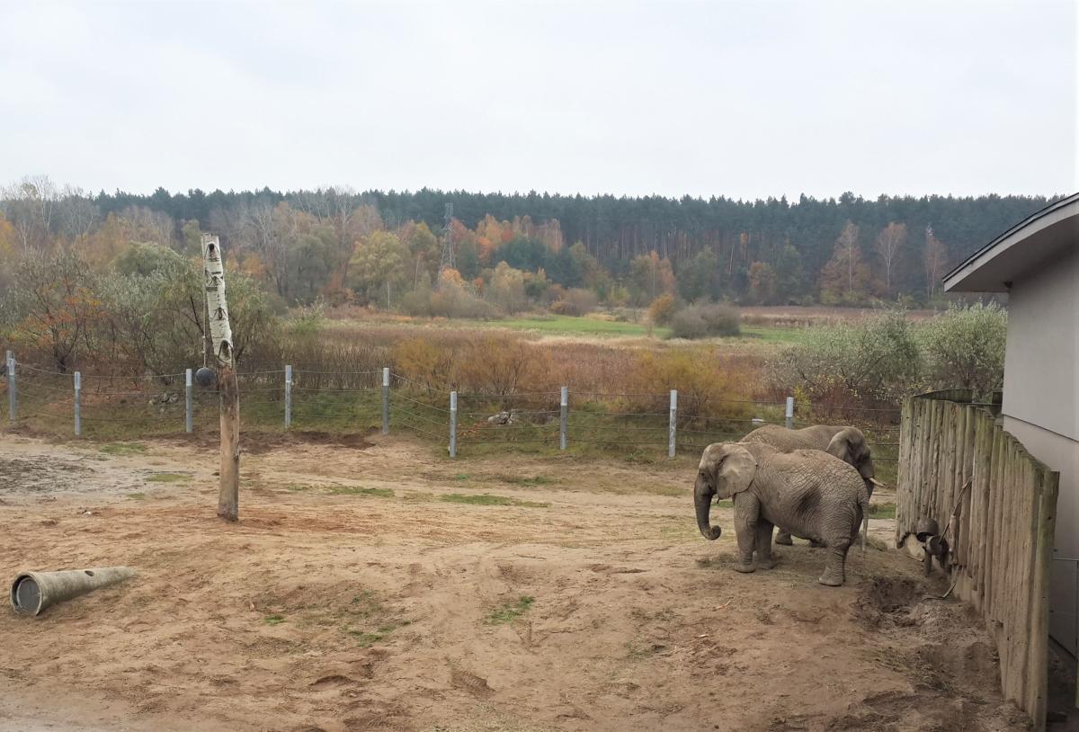 Слоновник в Новом зоопарке Познани / Фото Марина Григоренко