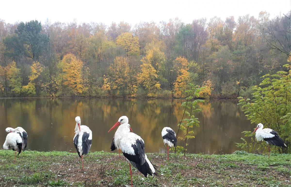 Новый зоопарк Познани - это почти лес / Фото Марина Григоренко