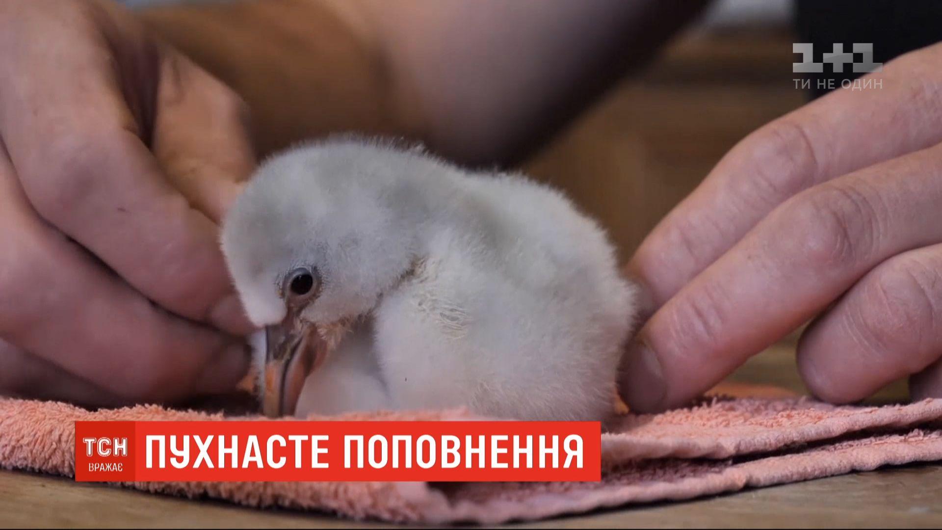 Птенец родился несколько недель назад с весом в 50 граммов / скриншот