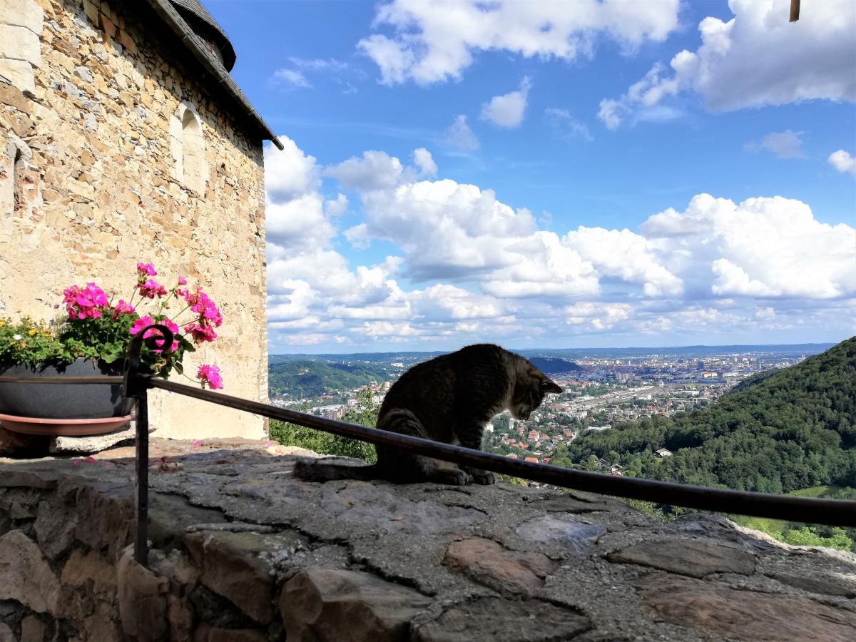 Замковые коты в Гёстинге / Фото Марина Григоренко