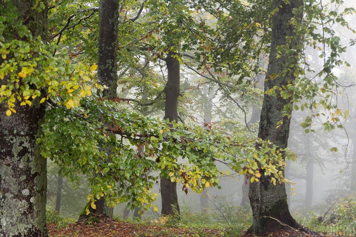 Екологи розкритикували новий закон / фото УНІАН