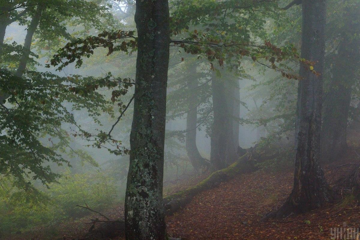 В Україні набув чинності закон про заборону вирубки лісу на схилах Карпат / фото УНІАН