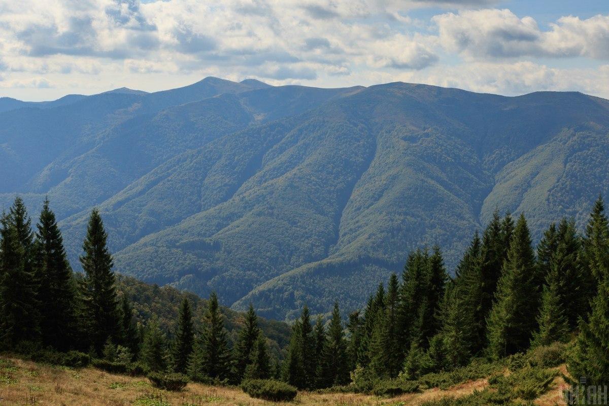 Депутаты запретили сплошные вырубки леса в Карпатах / фото УНИАН