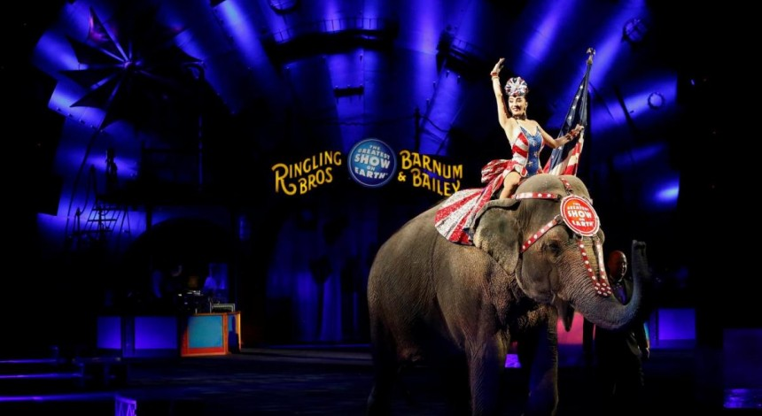Впервые в Украине: суд Одессы запретил цирку эксплуатировать животных