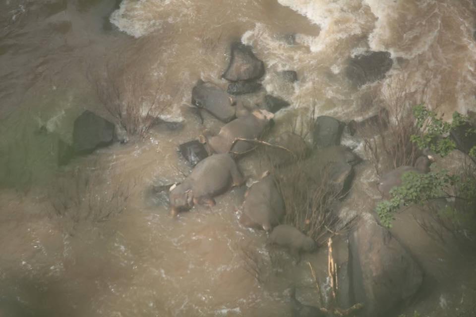 Шесть слонов погибли у водопада в Таиланде / фото DNP Thailand