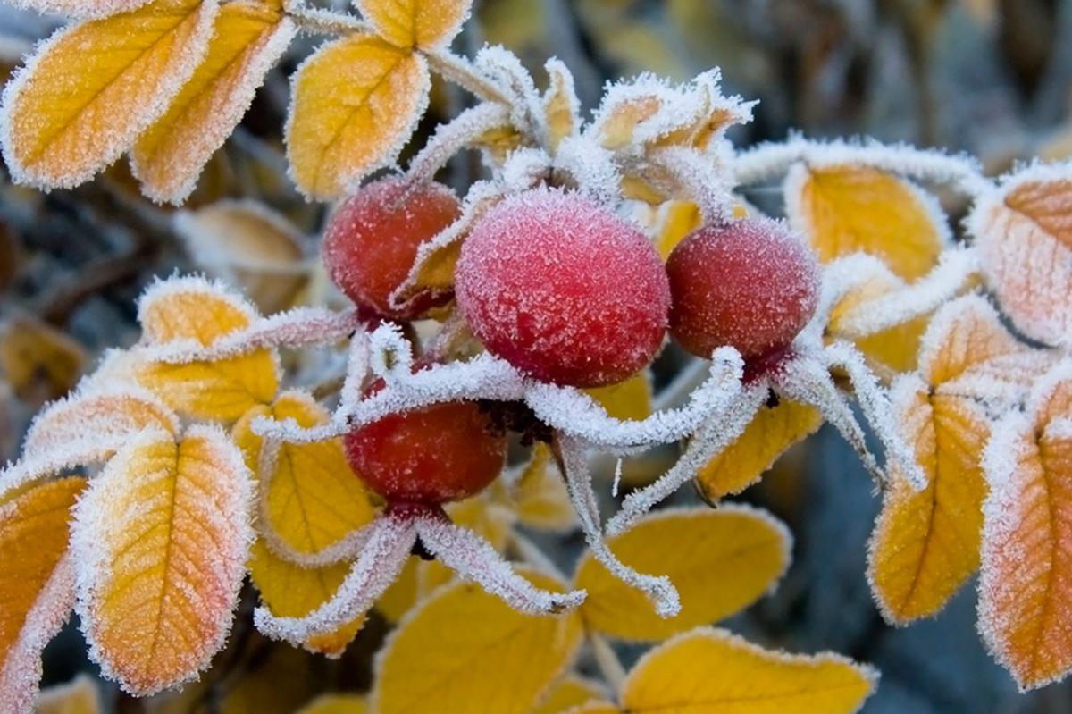 На следующей неделе украинцев ждет холодная погода / provse.today