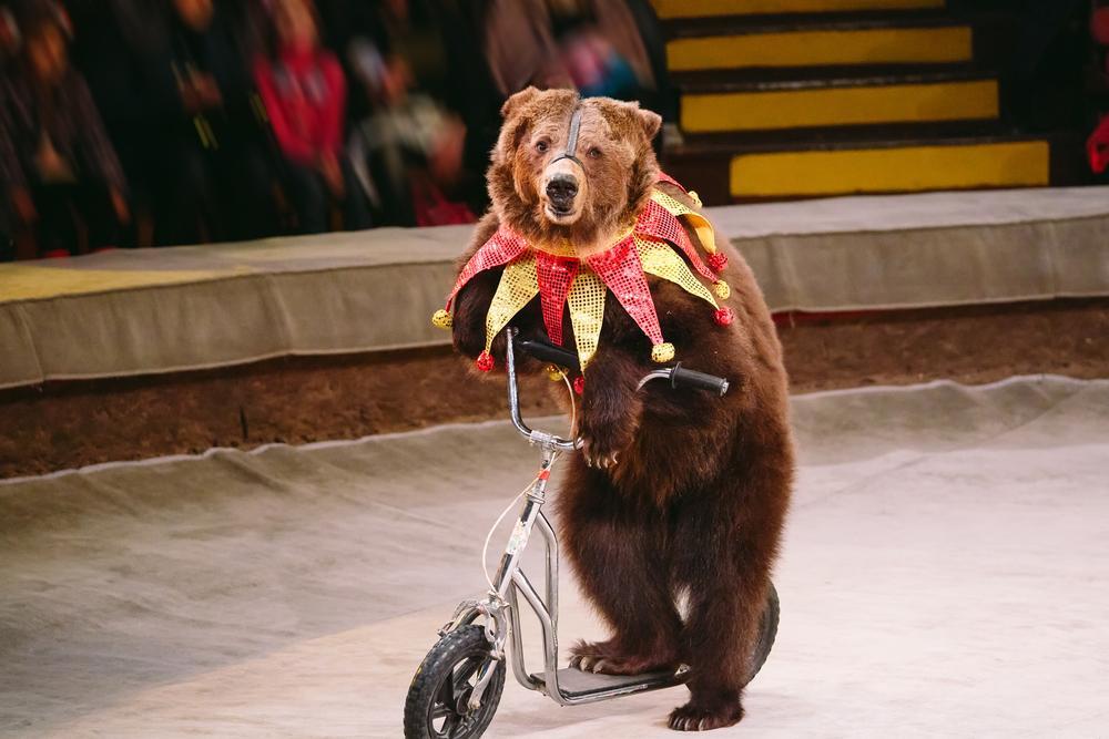 Сегодня в Украине действует семь государственных цирков, которые финансируются из бюджета / vokrugsveta.ua