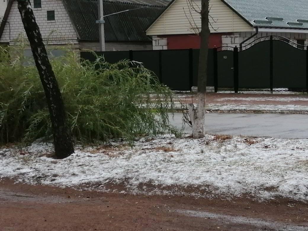 Перший сніг на Житомирщині / фото Facebook Irma Dern