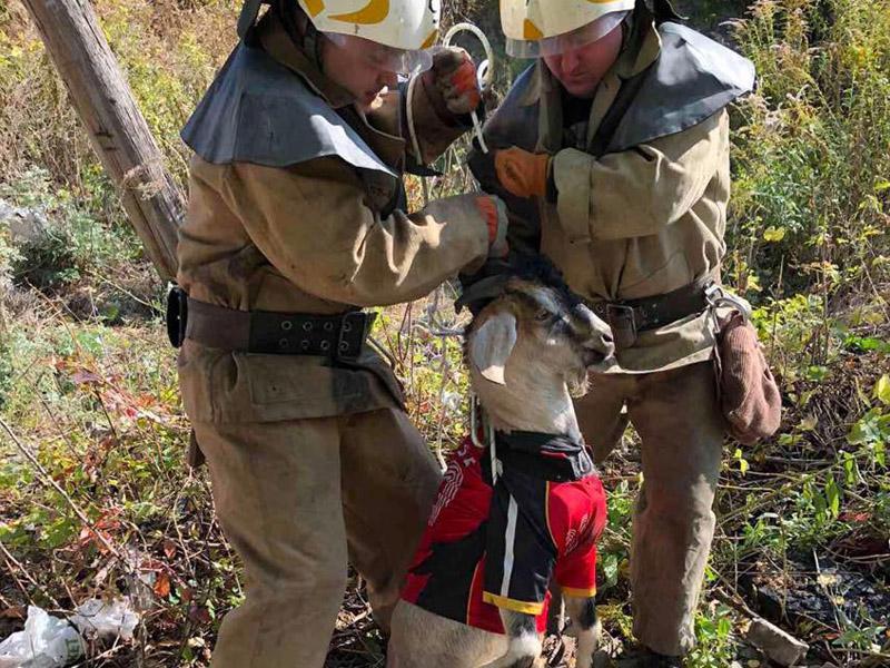 В результате падения животное не пострадало / фото ГУ ГСЧС в Днепропетровской области