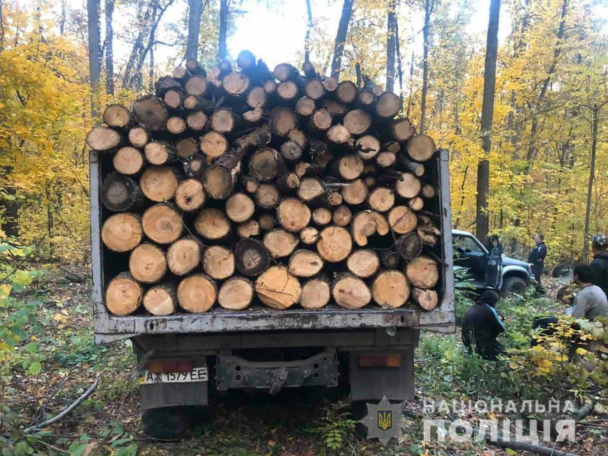 В грузовой части машины находилась древесина / фото НПУ