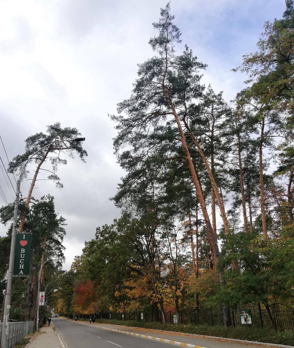 Буча расположена буквально посреди соснового леса / Фото Марина Григоренко