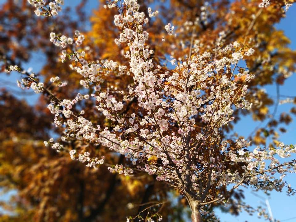 Из-за теплой погоды в Украине снова цветут деревья / www.facebook.com/dniprouzn