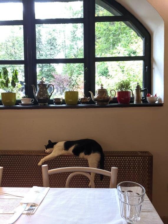 В ресторане у подножия Замка Бран / Фото Евгений Матюшенко