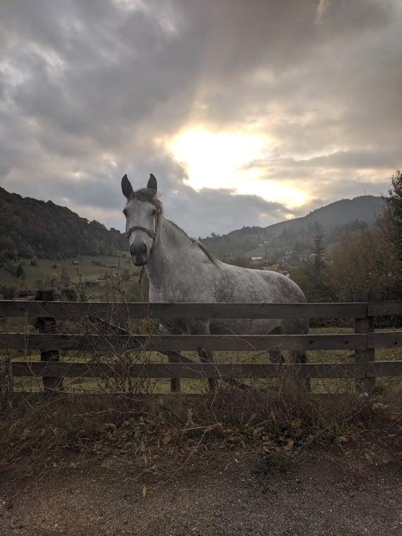 Одинокая лошадь неподалеку от Брашова / Фото Евгений Матюшенко