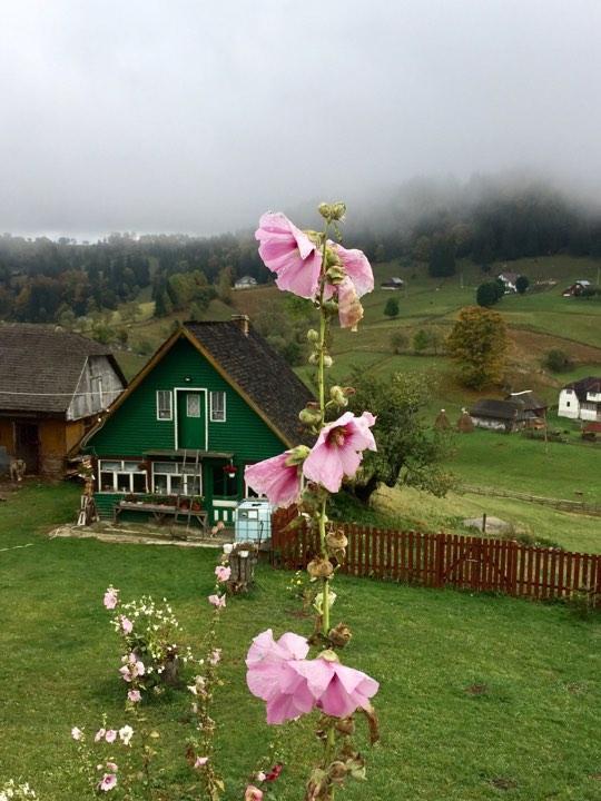 По дороге из Брашова на Трансфагараш - горные цветы / Фото Дарья Мацкевич