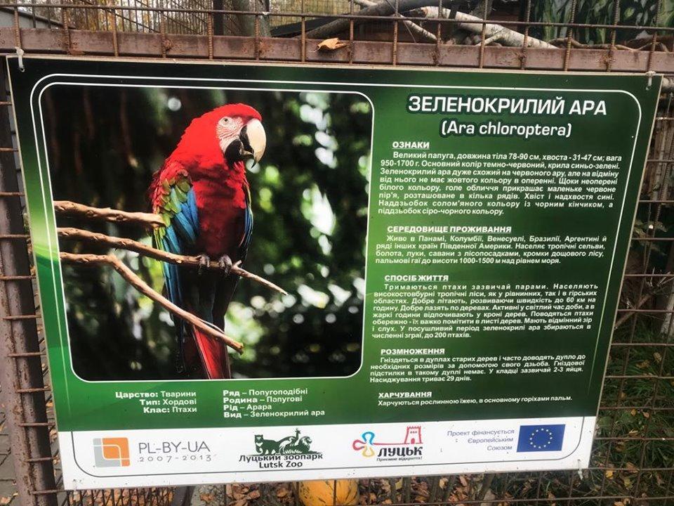 Цена за одну птицу может достигать до 3,5 тыс. долл. / фото Facebook Луцкого зоопарка