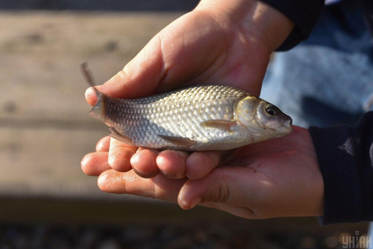 День рибалки / Фото УНІАН