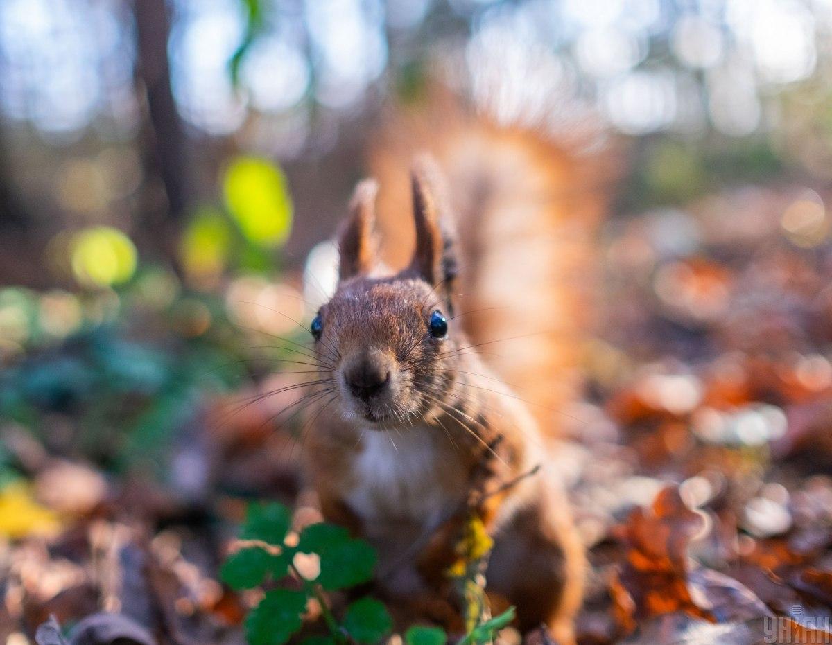 Білку випустили на волю у сосновий ліс поблизу ТРЦ \ Фото УНІАН