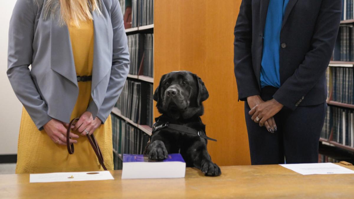 Під час присяги Хетті поклала праву лапу на книгу законів/ фото Block Club Chicago