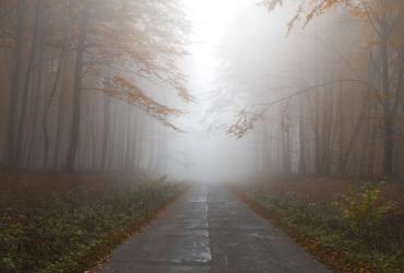 Синоптики рассказали, какой будет погода в ноябре в Украине