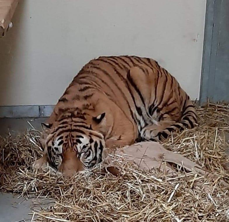 facebook.com/Zoo-Poznań-Official-Site