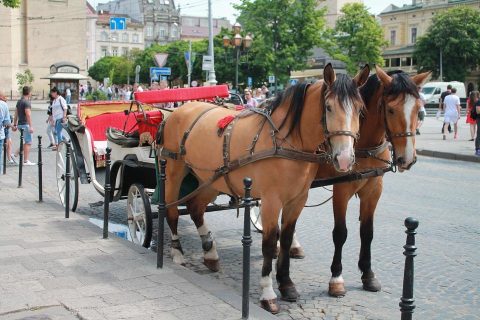 Во Львове ввели временный запрет на перевозку в конных экипажах / фото: pixabay.com