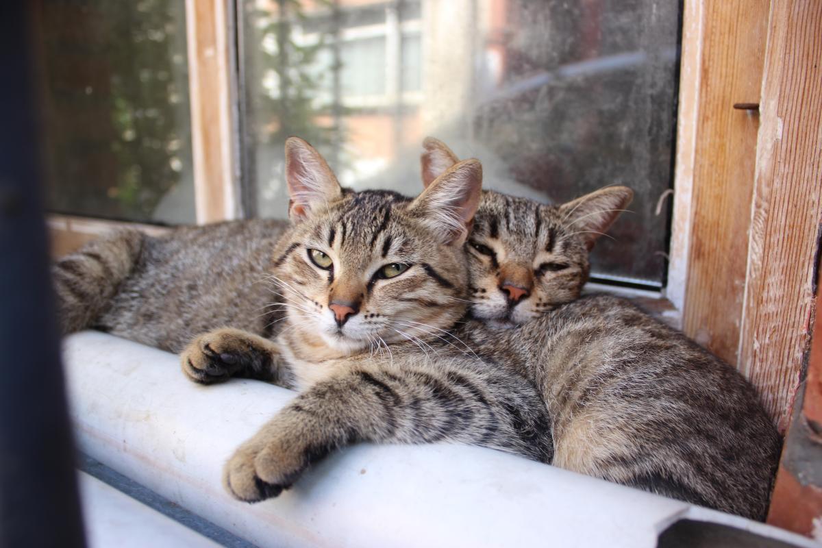 Коти - справжні господарі у Стамбулі / Фото Олександр Куницький