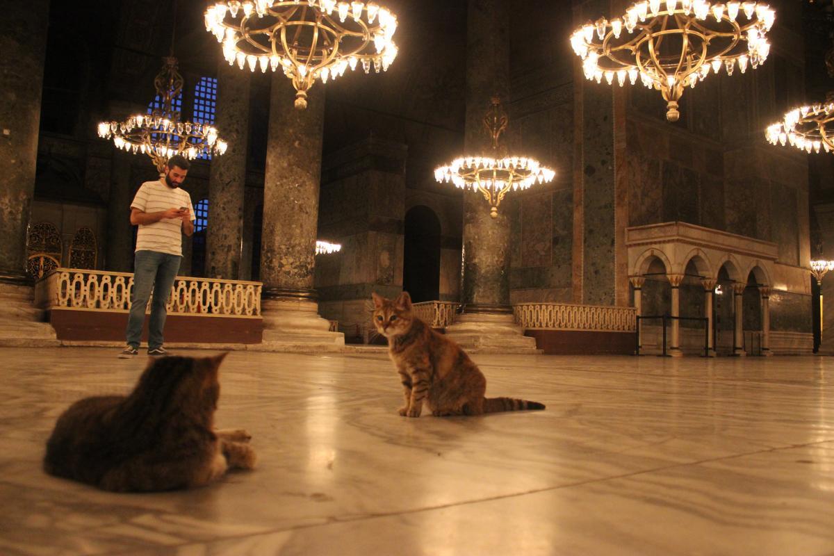 Легендарні коти Софійського собору / Фото Олександр Куницький