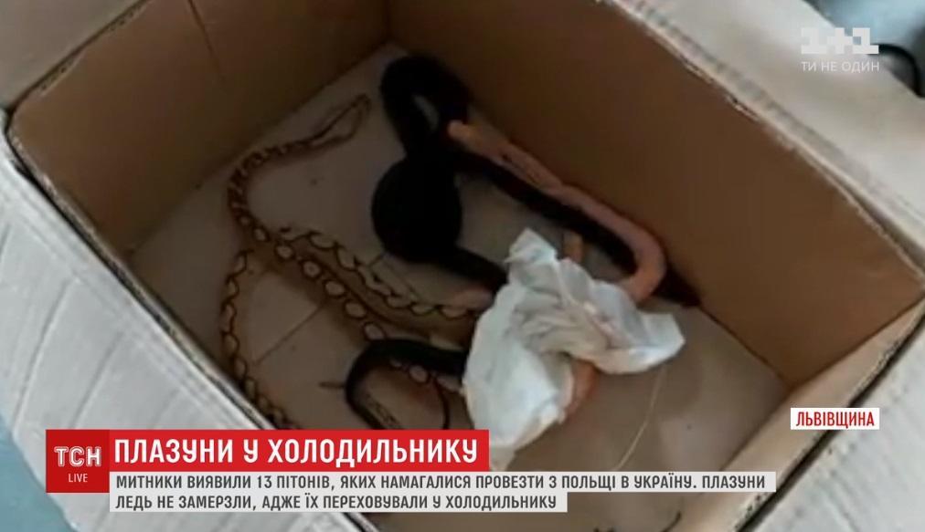 На границе задержали авто со змеями / Скриншот, ТСН