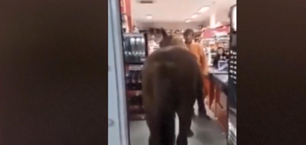 Кінь залишив після себе в магазині купу кізяків \ скріншот з відео