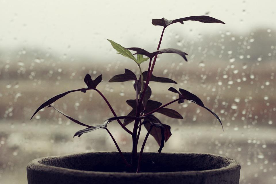 Комнатные растения не улучшают воздух в помещении, говорят ученые / фото pixabay.com