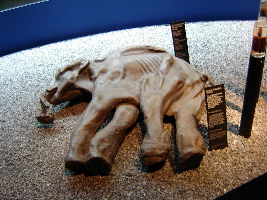 Відкриття на розкопках в Мексиці вказує, що полювання на мамонтів булоорганізованекуди складніше \ Вікіпедія