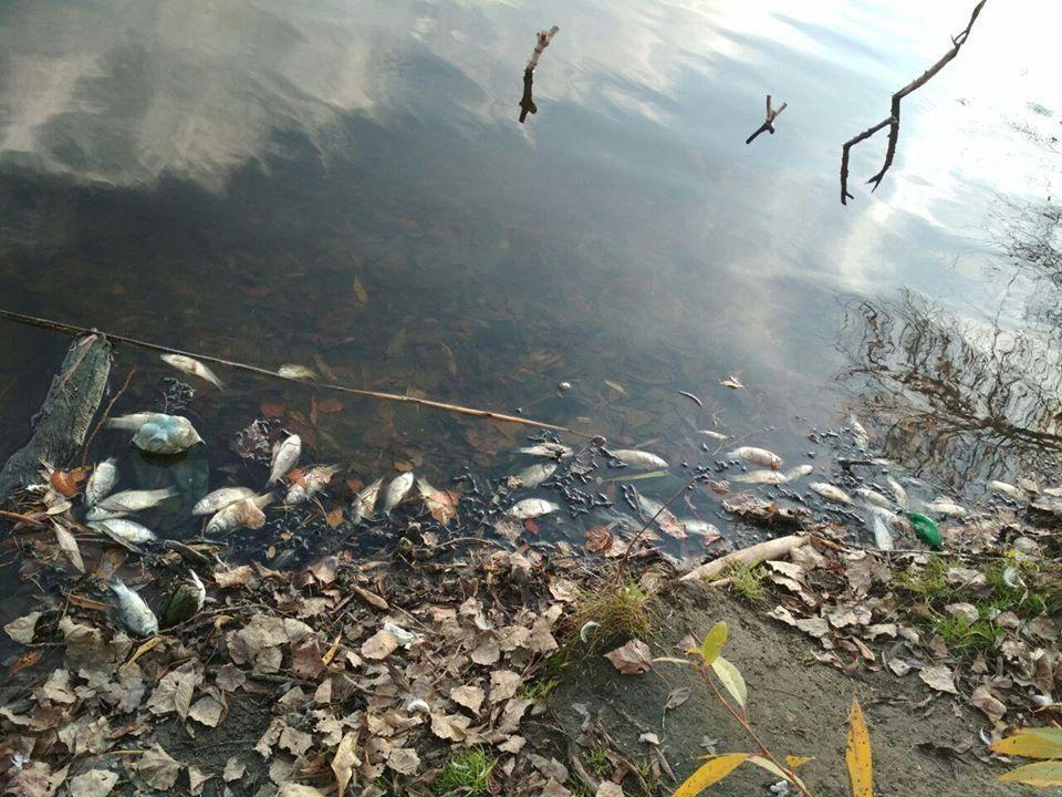 Экологи подсчитали прямые убытки и ущерб от потери потомства / фото Житомирского рыбоохранного патруля