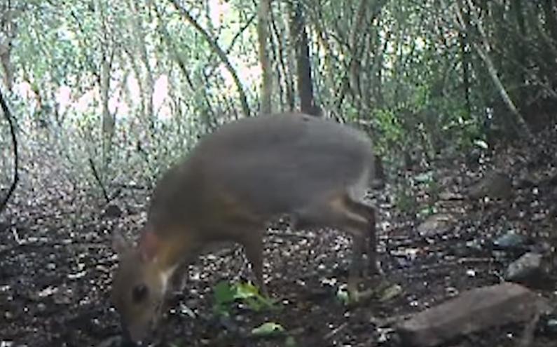 Последнего представителя этого вида убил охотник в 1990 году\ скриншот с видео