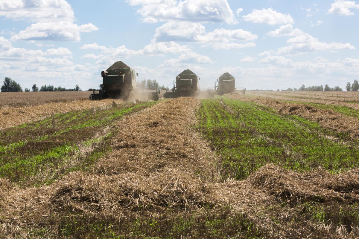 В текущем году Украина установит новый рекорд по сбору урожая зерновых / фото УНИАН