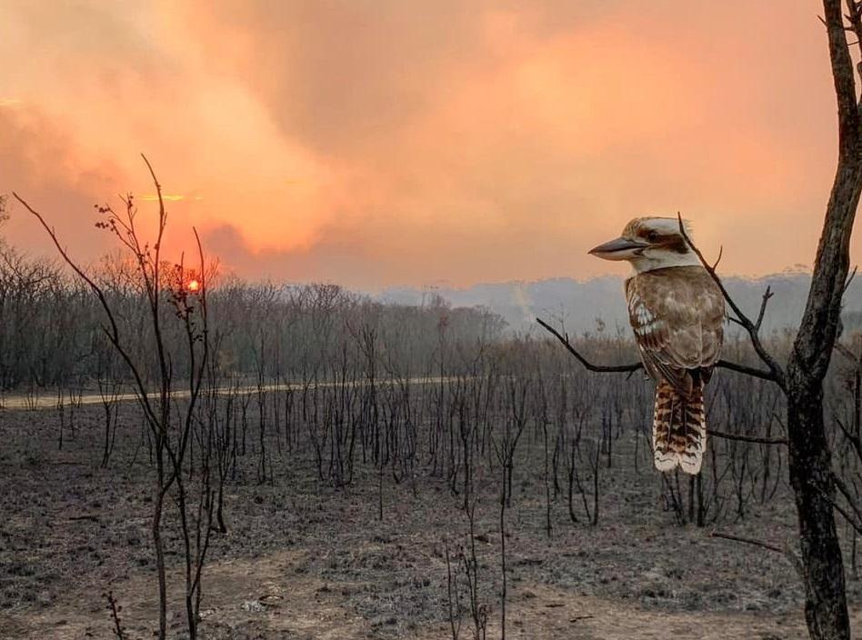 Масштабные лесные пожары в Австралии охватили огромные площади/ REUTERS